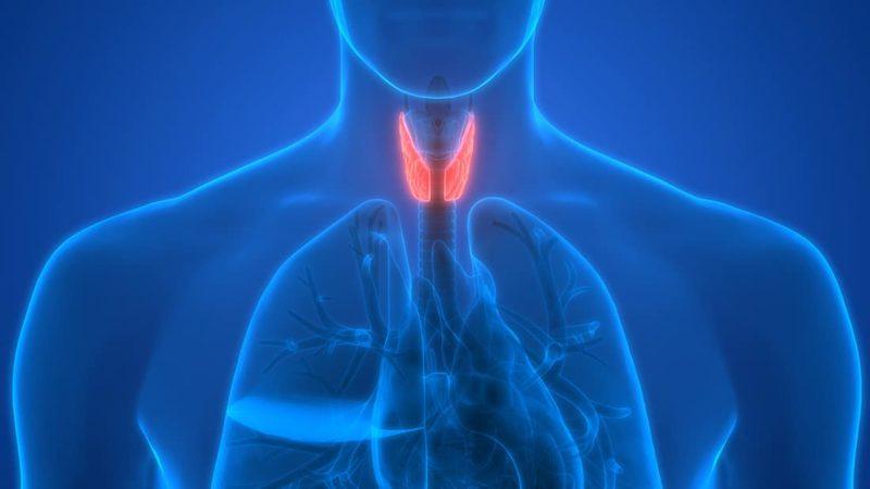 Thyroid T3 and Hair Loss Treatment